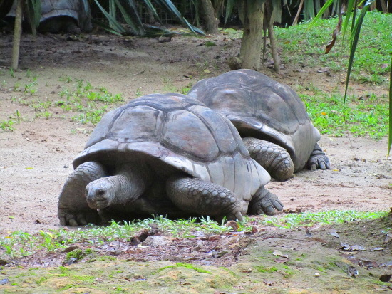 Tortoises were holding a 100-metre race at this part of the zoo
