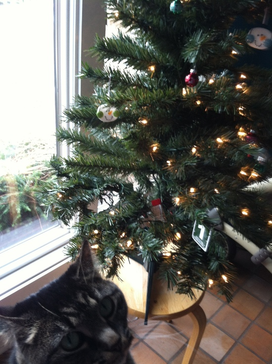 Luckily it came pre-lit. Lily was very curious about the tree