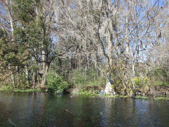 Spanish moss in the trees (neither Spanish nor moss, but there you go)