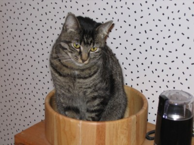 Lily in the fruit bowl