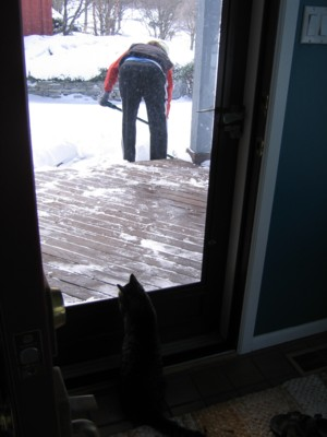 Lily watching Vin shovel