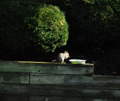 Squirrel squirreling away nuts