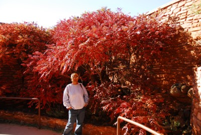 Red tree at Red Rock State Park!