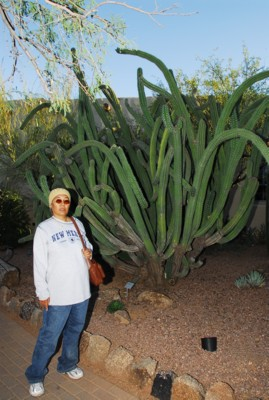 Mak by more giant funky cacti