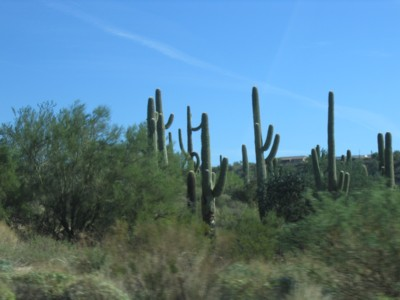 Saguaro photo taken by Abah