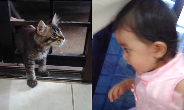 AAAAAA! KITTY!