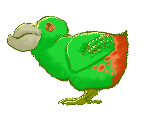Flame-rumped kido