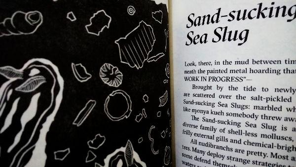 Sand-sucking Sea Slug
