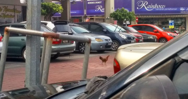 Why did the chicken cross the car park?
