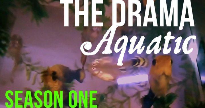 The Drama Aquatic Season One